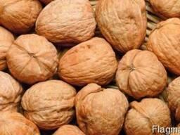 Куплю грецкий орех урожая 2017 года