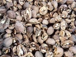 Куплю Грецкий орех в скорлупе Долбун (жадный), недокол , минусовку (28-), откат