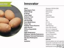 Куплю картофель инноватор