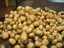 Куплю картофель оптом обьёмами, Беллароза и тд.