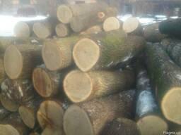 Куплю кругляк деловой или на дрова (Дуб, сосна, тополь)