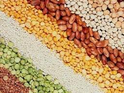 Куплю крупу яневую, перловую, пшеничную, артек, пшено
