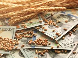 Куплю кукурузу, пшеницу, ячмень и др. виды зерновых с поля и со склада! По выгодным ценам!