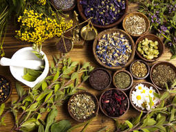 Куплю лекарственные травы, корни, растения.