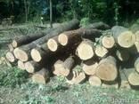 Куплю лес дуба 3 сорт, тех сирье, баансы. договорная - фото 1