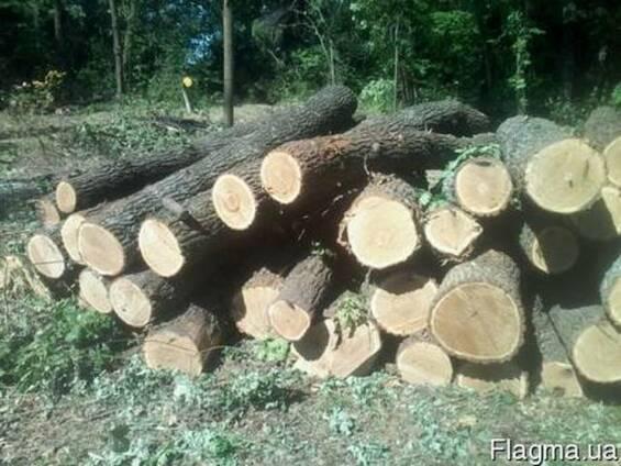 Куплю лес дуба 3 сорт, тех сирье, баансы. договорная