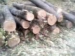 Куплю лес дуба 3 сорт, тех сирье, баансы. договорная - фото 2