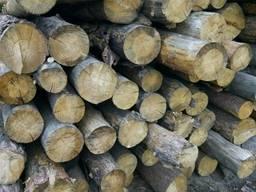 Куплю лес кругляк, сухостой, сосна