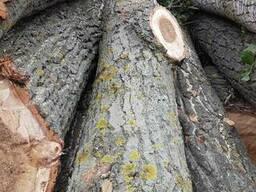 Куплю лес кругляк тополя и другой лес мягкой лиственницы