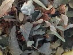 Куплю липовый цвет с листом или липовый лист
