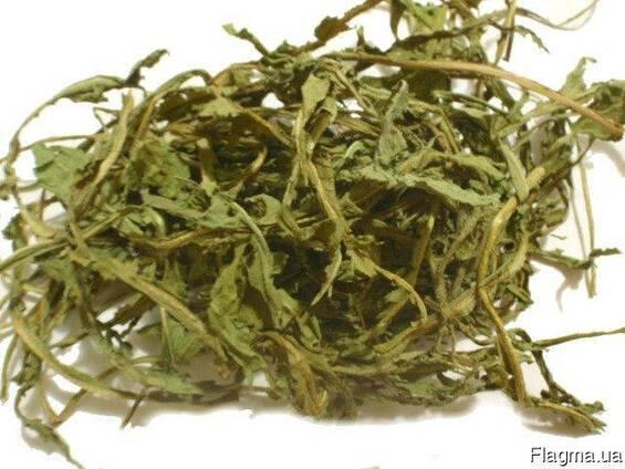 Куплю листья одуванчика (кульбаби)