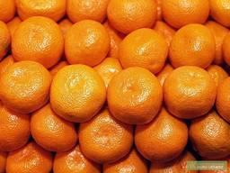 Куплю мандарины оптом 10 тонн постоянно.