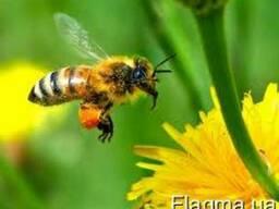 Куплю мед, дорого
