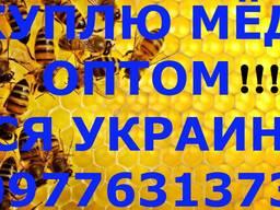 Куплю мед с рапса и подсолнуха . Вся Украина