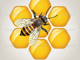 Куплю мед самовывоз