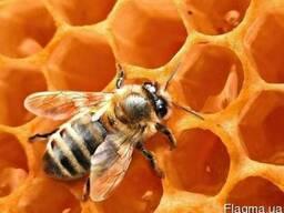 Куплю мед в неограниченном количестве