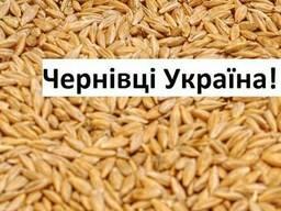 Куплю Ячмень Черновцы Украина