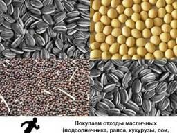 Куплю отходы масличных подсолнечника, рапса, кукурузы, сои