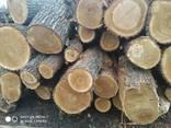 Куплю постійно дуб дрова т/с і сорт D все що є - фото 5