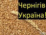 Куплю Пшеницу Чернигов Украина - фото 2