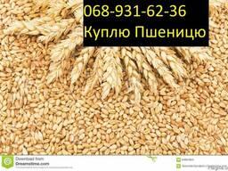 Куплю Пшеницу Чернигов Украина - фото 3
