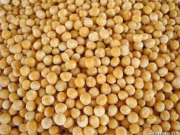 Куплю Пшеницу, Горох, Кукурузу