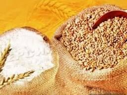 Куплю Пшеницу, ячмень, кукурузу, просо, горох, овес