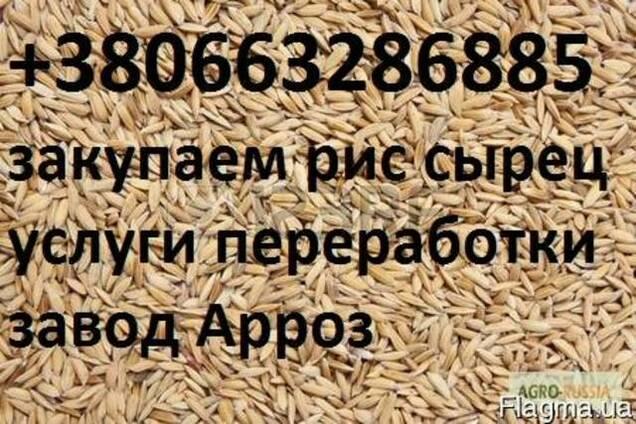 Куплю рис сырец услуги переработки Риса Сырца 0663286885