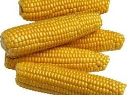 Куплю для себя: Пшеницу, Кукурузу, Ячмень. Отходы.