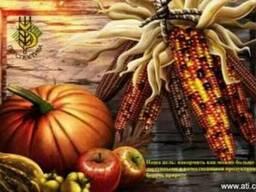 Куплю сельхозпредприятие, агрофирму
