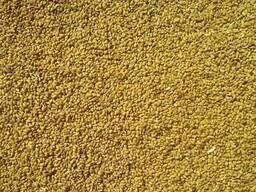 Куплю семена люцерны не очищенную с поля. со склада