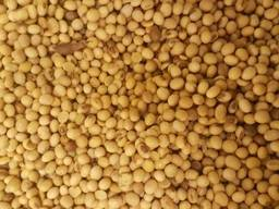 Куплю сою ГМО, не ГМО , половинки (маслозавод)