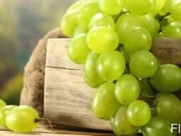Куплю виноград от производителя
