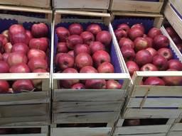 Куплю свежие груши и яблоки на экспорт - фото 3