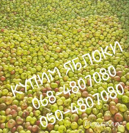 Куплю яблоки на переработку. Харьков Полтава Донбасс