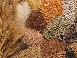 Куплю ячмень, пшеницу, рапс