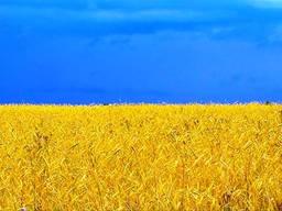 Куплю Землю сельхозназначения , паи от 100 гектар Рассмотрю