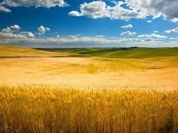 Куплю землю сільгосп призначення від 100га - 1000га (у приватній власності/пайова)