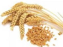 Куплю зерно та зерновідходи