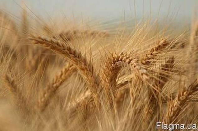 Куплю зерновые подсолнечник