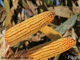 Квс 6471 купить кукурузу, Квс 6471 цена