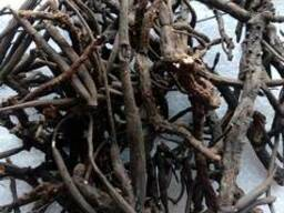 Лапчатка белая(пятепал корень)