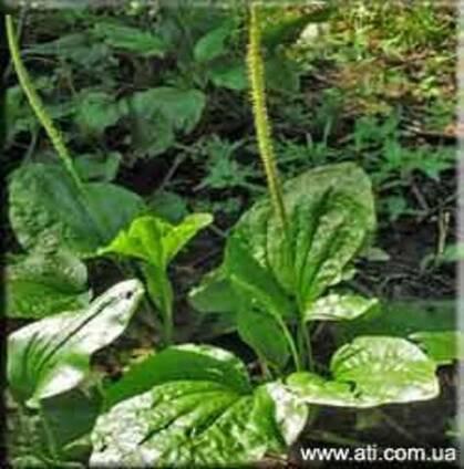 Лекарственные травы в сушёном виде