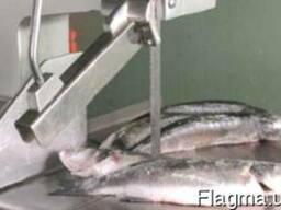 Ленточные пилы для рыбы
