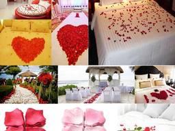 Лепестки роз номер 16 для фотосессии , для свадеб