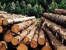 Лес - кругляк (Рудстойка, пиловочник, стройлес, техсырье)