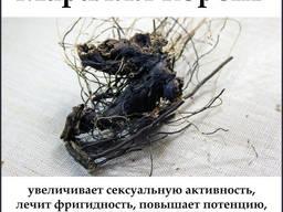 Левзея корень. Маралий Корень Алтайский оригинальний