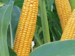 ЛГ 30254 кукуруза купить, ЛГ 30254 цена