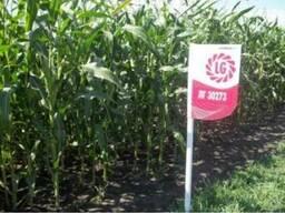 ЛГ 30273 кукуруза купить, ЛГ 30273 цена