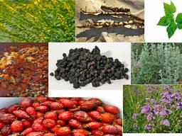 Лікарські рослини, ягоди та корені